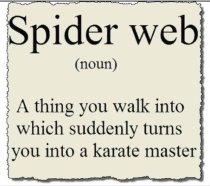 Spider+web_e98ce9_3395976